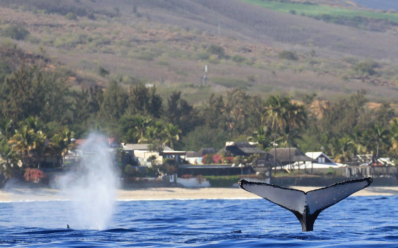 Whale Watching an der Küste der französischen Insel La Réunion.