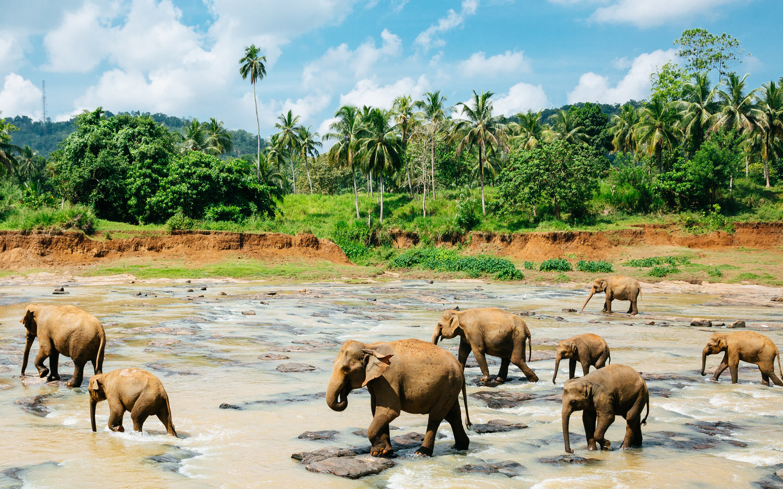 Die in diesem Sri Lanka Reisebericht erwähnten Elefanten in einem bekannten Elefantenwaisenhaus in Pinnawala.