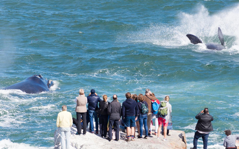 Whale Watching von einem Aussichtspunkt aus nahe Hermanus in Südafrika.