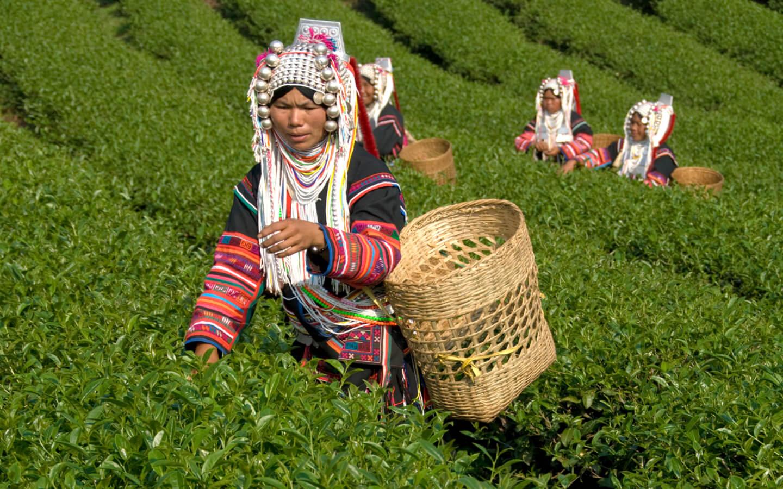 Eine Frau in traditionellen Kleidern auf einer Plantage in Vietnam.