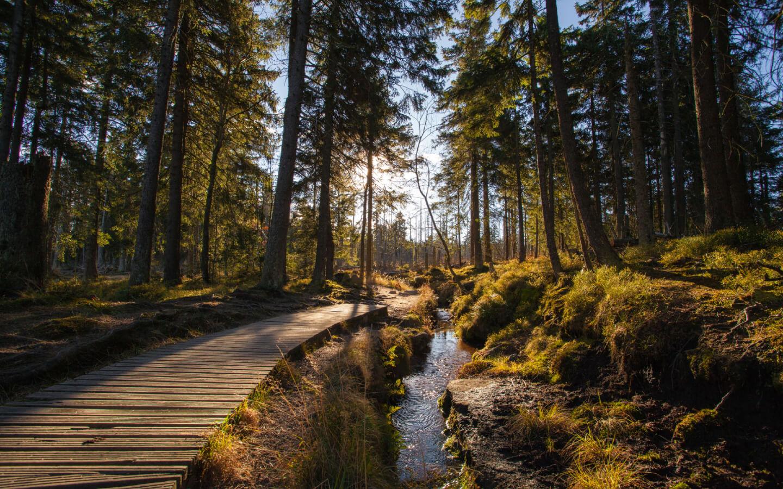 Ein Wald im Mittelgebirge Harz in Norddeutschland.