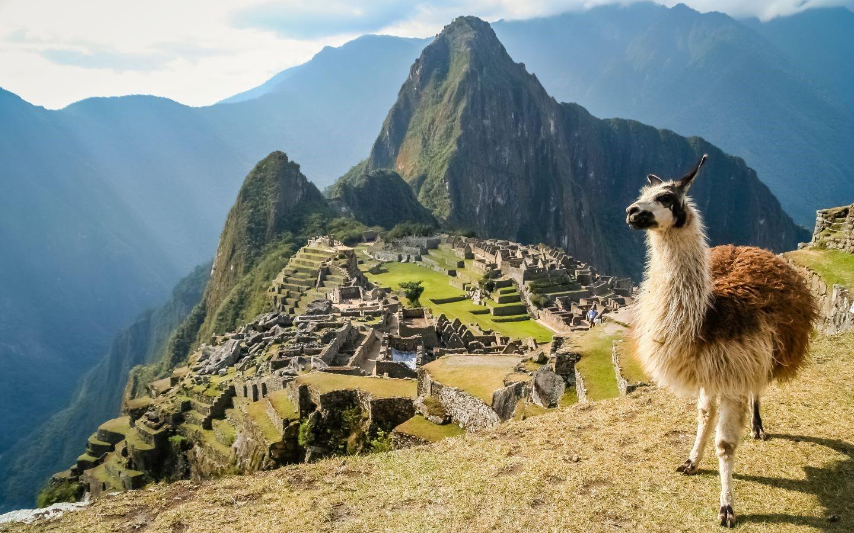 Ein Lama mit der Ruinenstadt Machu Picchu im Hintergrund.