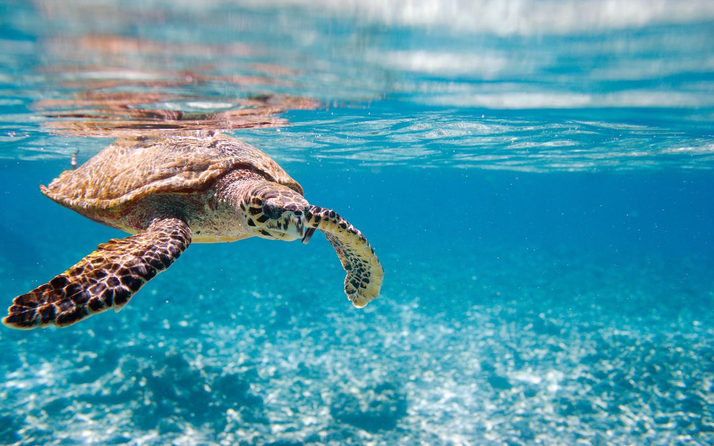 Auch die Schildkröte ist ein vom Aussterben bedrohtes Tier.