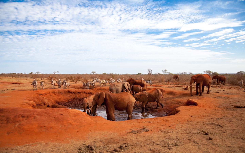 Elefanten im Öko-Reiseziel Botswana.