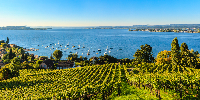 Weinfelder sind ein bekannter Anblick bei einem Bodensee-Urlaub.
