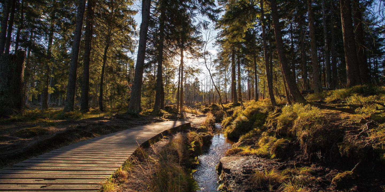 Einer der vielen schönen Wanderwege für einen Urlaub im Harz.