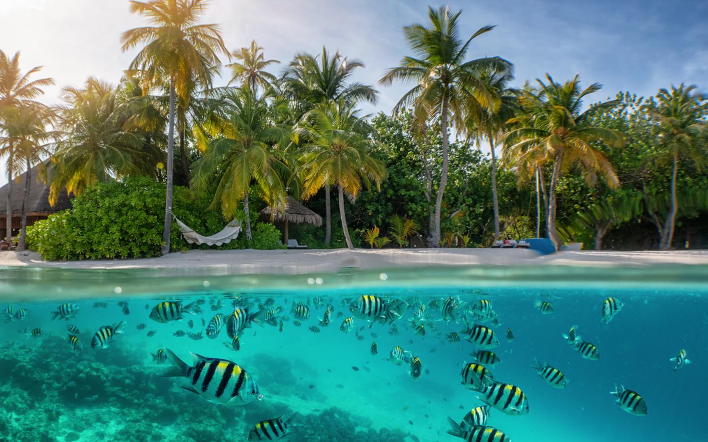 Die Unterwasserwelt der Malediven und ein typischer weißer Sandstrand.