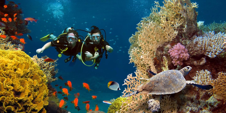 Tauchen auf den Malediven mit der bunten Unterwasserwelt.