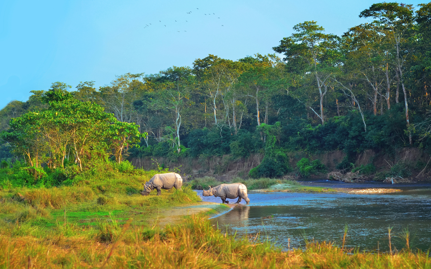 Tiere im Chitwan Nationalpark in Nepal.