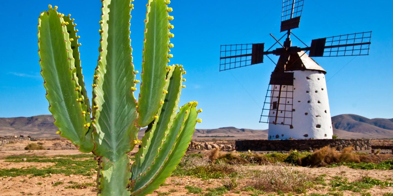 Eine typische Windmühle und ein Kaktus auf einer der 7 kanarischen Inseln.