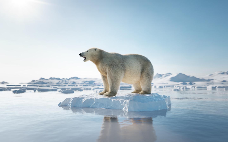 Ein Eisbär auf einem schmelzenden Gletscher.