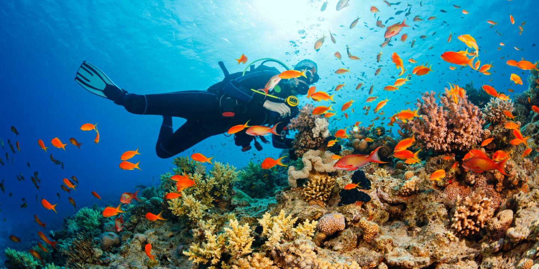Ein Taucher beim Tauchen auf den Seychellen über bunten Korallenriffen.