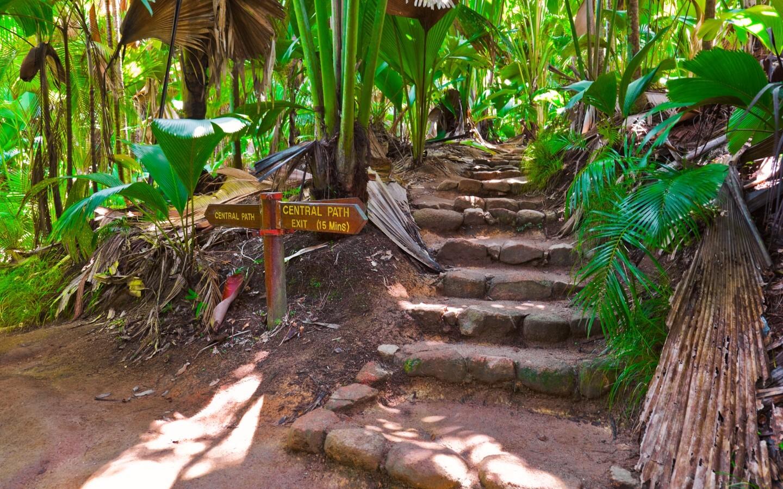 Der Nationalpark Vallée de Mai auf der Seychellen-Insel Praslin ist ein UNESCO-Weltnaturerbe.