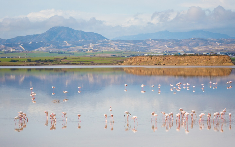 Der Salzsee von Larnaca westlich der Stadt Larnaca.