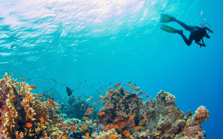 Ein Taucher über bunten Korallenriffen auf den Seychellen.
