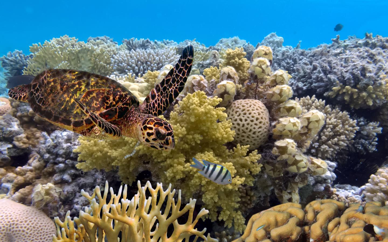 Das Great Barrier Reef in Australien wurde durch seine Vielfalt an Korallen und Fischen zum UNESCO-Welterbe erklärt.